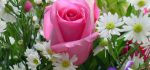 خرید گل و گیاه آپارتمانی از گل فروشی آنلاین بانک گل